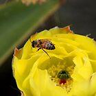 Angry little bee by MarthaBurns