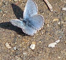 Tiny blue butterfly at Tipsoo Lake in Mt. Rainier Nat'l Park by MischaC
