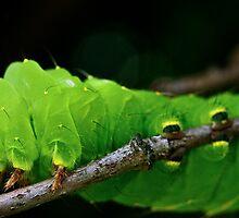 Green Caterpillar by Joe Thill