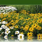 March of the  Daisies by BlueMoonRose