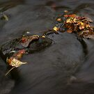 river in autumn I by Dave Milnes