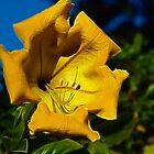 Yellow Bloom by Karen Checca