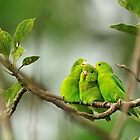 Loving Birds by Amir Saeed