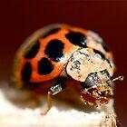 Ladybug by Heather-Jayne