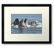 Satisfied Humpback Whales #3 Framed Print