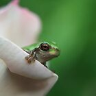 Cute frog peeking out of pink rose by SolsticeSol