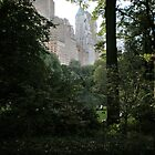 View from Central Park, New York. by joycee