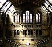 Natural History Museum by SnapFlashPhotos
