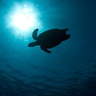 Turtle Silhouette by Todd Krebs