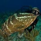 Diver with Nassau Grouper by Todd Krebs