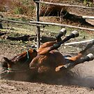 Rolling Horse by kimwild
