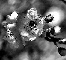 To Bloom by Joy Watson