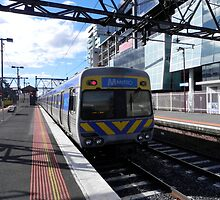 Northern Comeng at South Yarra by Fraser .D. Trembath