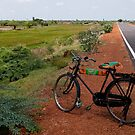 Bicycle, Tamil Nadu by Syd Winer