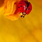 LADYBIRD by Sandy Stewart