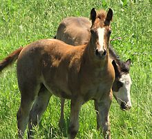 Friendly Filly by lorilee