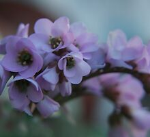 Soft Purple... Free State, South Africa by Qnita