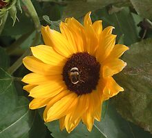Bumble bee on sunflower by rualexa