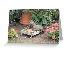 World's Largest Squirrels Greeting Card