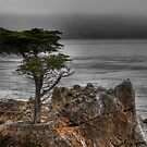 The Lone Cypress by Blake Rudis