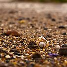 Macro of shells by Richard Keech
