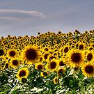 Simple Sunflowers by Monica M. Scanlan