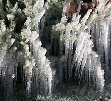 Sprinklers and Freezing Temps by Brancy