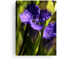 Fringed Purple Gentian Canvas Print