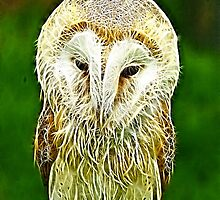 Fractalius Barn Owl by Trevor Kersley