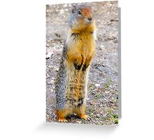Wild squirrel... ??  Greeting Card