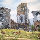 Soay sheep at Corfe Castle. by Joe Trodden