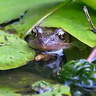 Close Up of a Frog by dragoncity