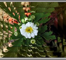 Thumbellina Reflection - Tiny Flower in Mirrored Frame by BlueMoonRose