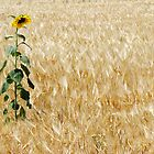 Lone Sunflower by David Kocherhans