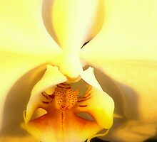 The Soft Orchid by godmommy5
