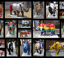 Rhino Mania in Chester by AnnDixon
