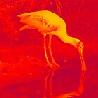 SPOONBILL by THOR01