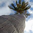 Bahamas by ericafaye