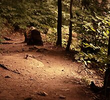 Falls Trail (Ganoga Glen) by Aaron Campbell