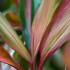 Maui Variegated Red Ti by Susan R. Wacker