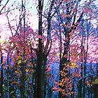 morning sunrise by Robyn Wilkey