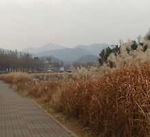 Jeonju City - South Korea by Robertglynn