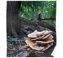 Ginormous Humungi Fungi Poster