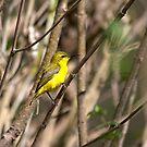 Sun Bird. by trevorb