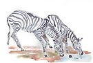 Zebras sketch by Maree Clarkson