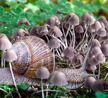 Snail and mushrooms by Antanas
