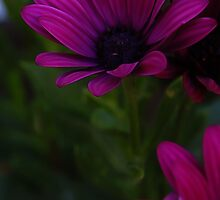 flower by iwasframed