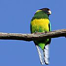  The Pondering Ringneck by Rick Playle