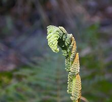 Almost a Leaf by Judy Wanamaker