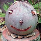 A Thai coconut Happy Face by DAdeSimone